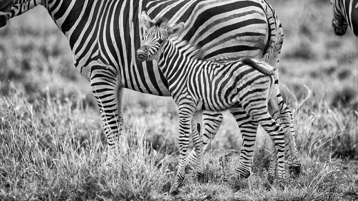 Cinco animales que podrían ayudarnos a vencer algunas enfermedades humanas