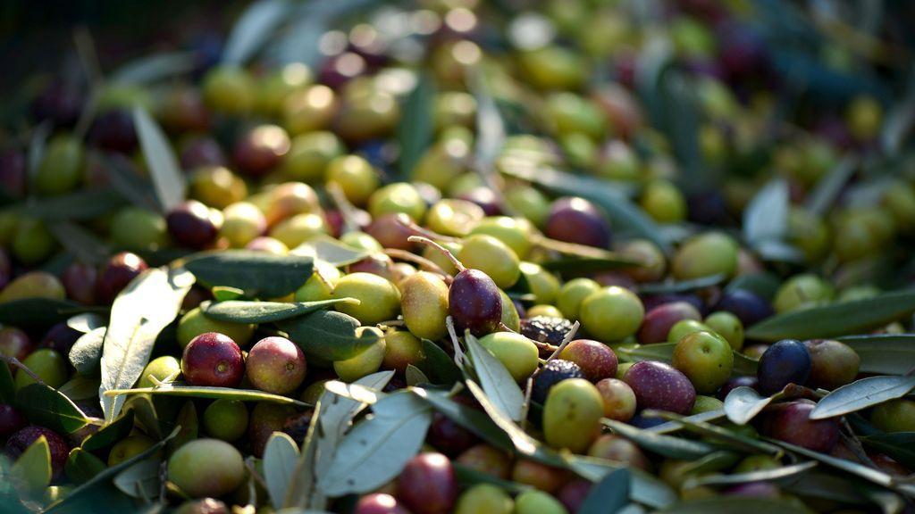 olives-253264_1920