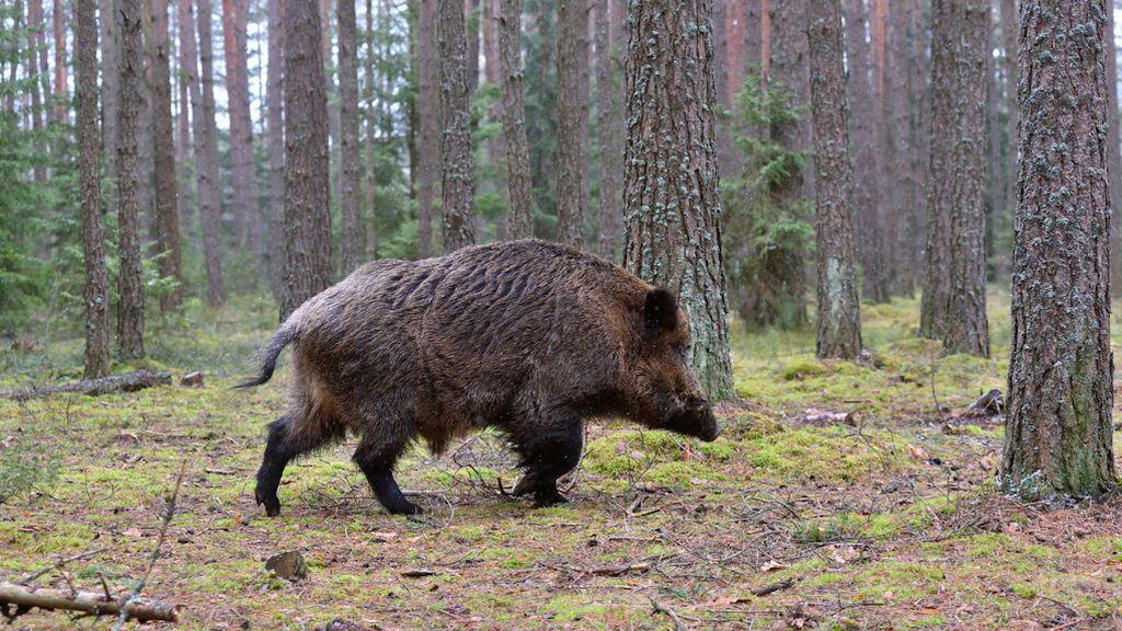 Los cazadores gallegos podrán salir todos los días de la semana a cazar