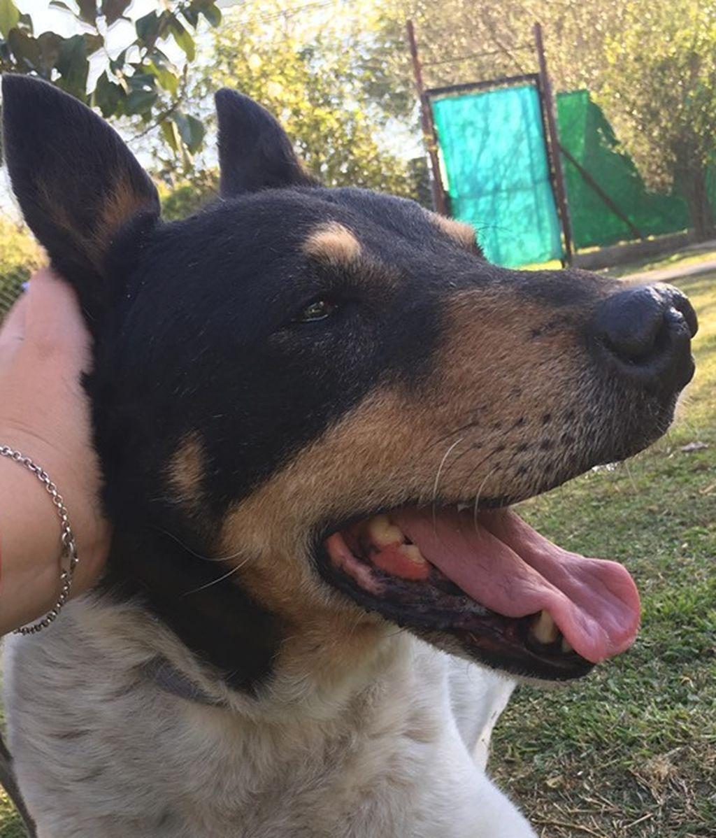 Toto, el perro que esperó que volviese su duelo durante un mes