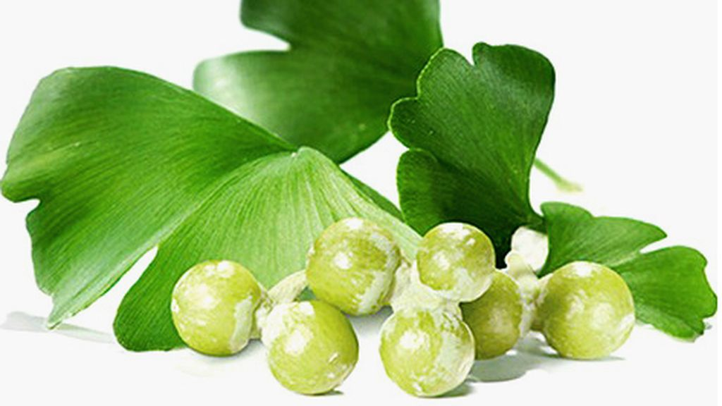 ginko-biloba-frutos