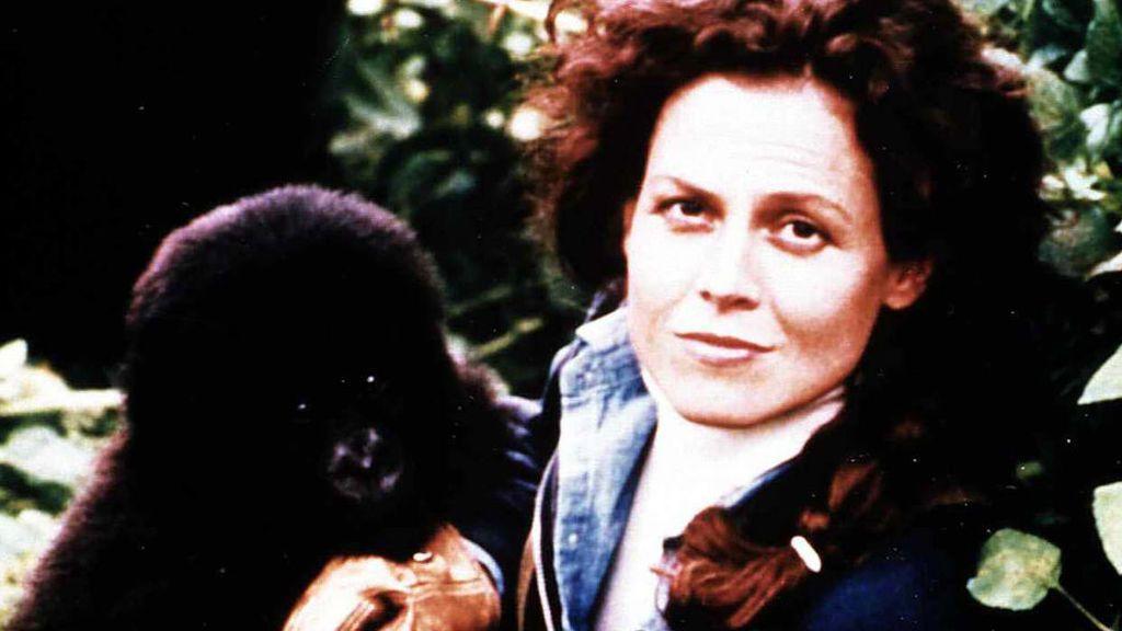 Imagen promocional de 'Gorilas en la niebla' (1988)