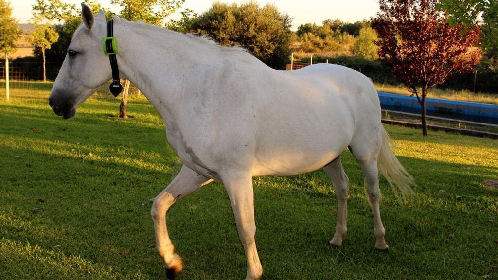La tecnología también sirve para controlar otros animales como caballos, ovejas o cabras