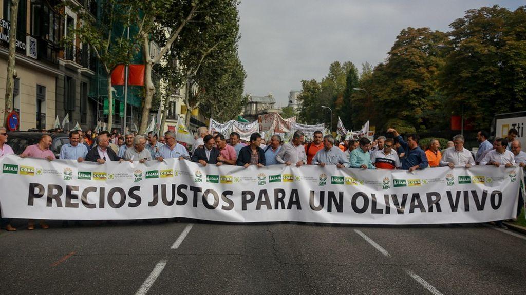Dos euros por un kilo de aceite: la crisis que ahoga a los olivareros