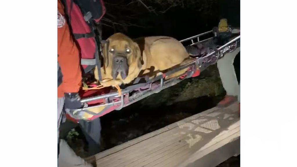 Rescatad al perro Floyd, el mastín que se quedó exhausto en una montaña de Salt Lake
