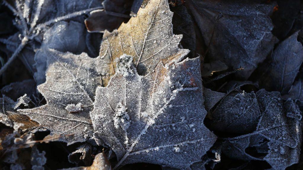 Primeros bajo ceros generalizados del otoño