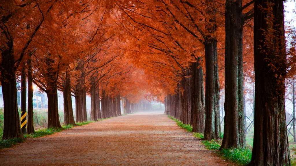 Bajada de temperaturas y lluvias dan por fin la bienvenida al otoño