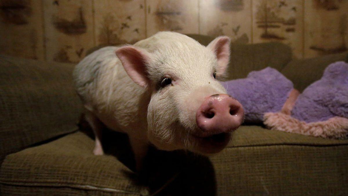 ¿Quieres comerte a tu mascota?  El nuevo 'reality' que impacta a Reino Unido