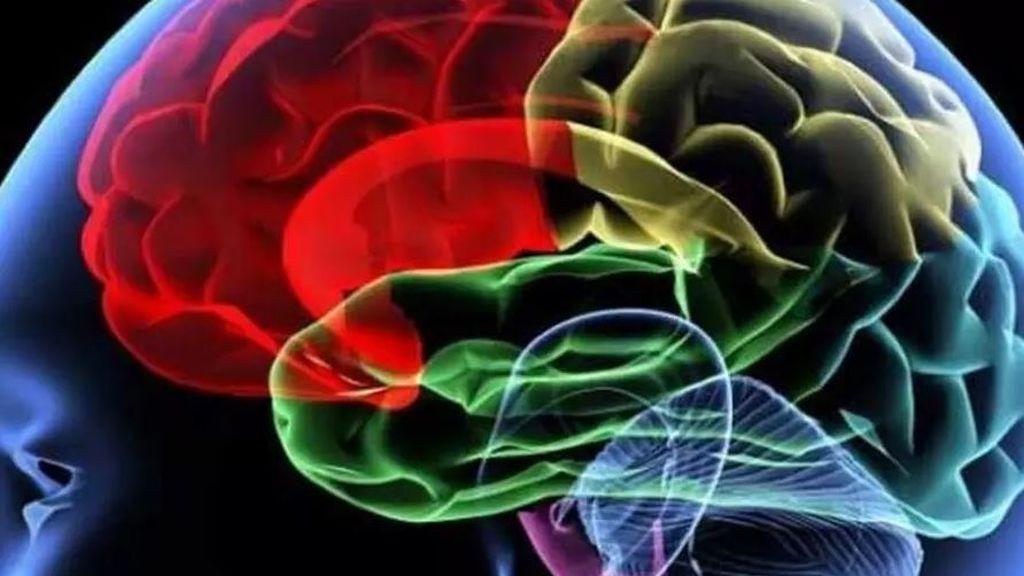 Cinco consejos prácticos para mantener sano tu cerebro