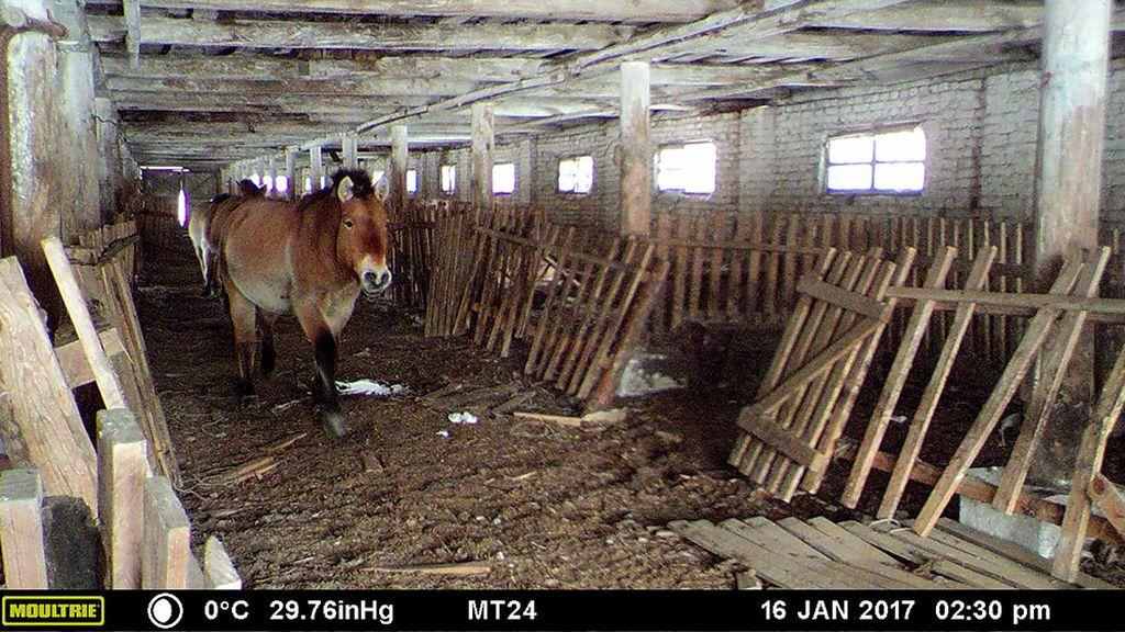horses-interior-2