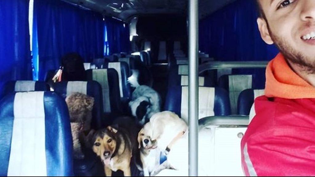 Autocar para mascotas: las imágenes de un peculiar paseador de perros que han conquistado la Red