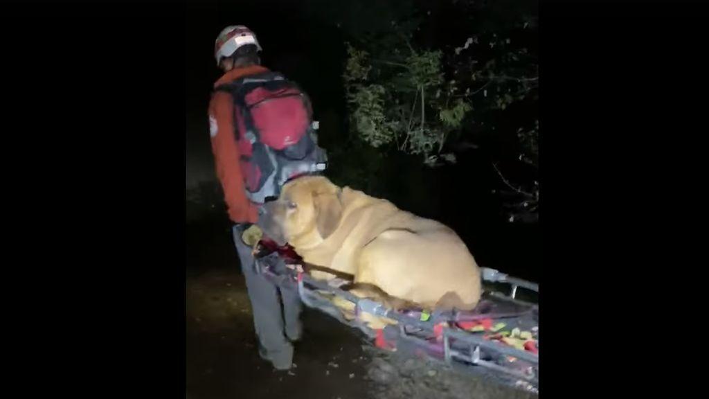 Un equipo de rescate baja a un perro de una montaña porque estaba demasiado cansado para caminar