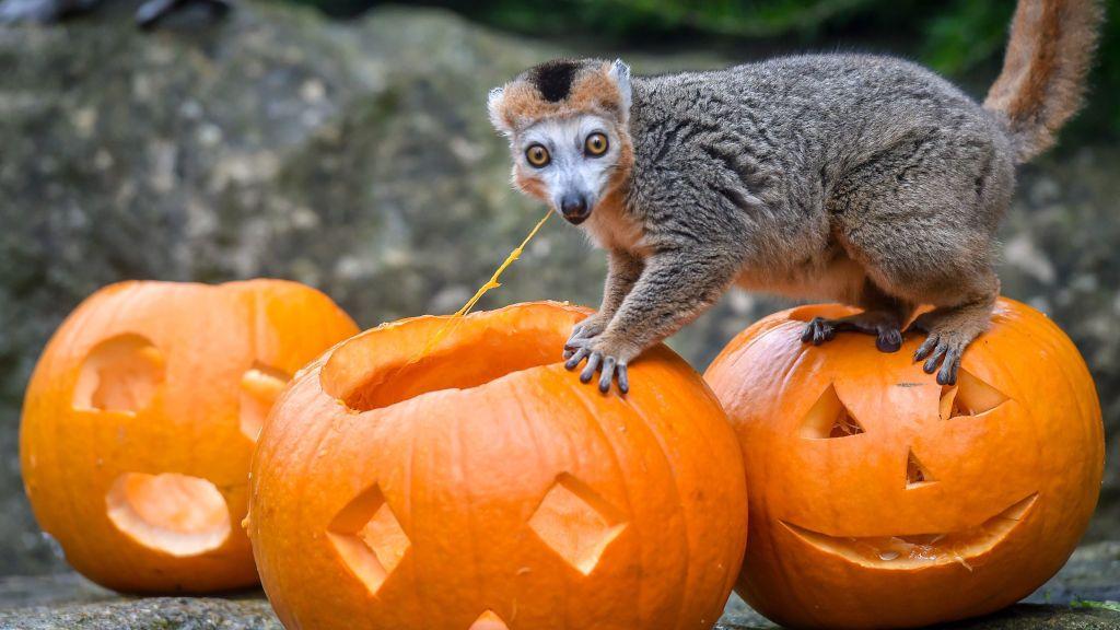 Los mejores disfraces para vestir a tu mascota en Halloween