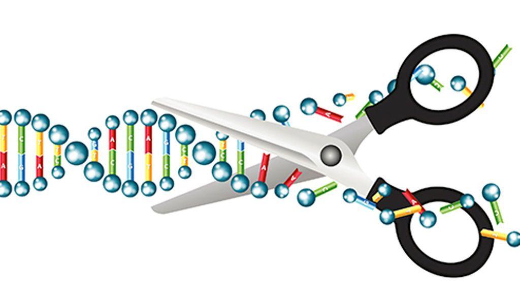 Desarrollan una técnica para editar el ADN y evitar la enfermedades de origen genético