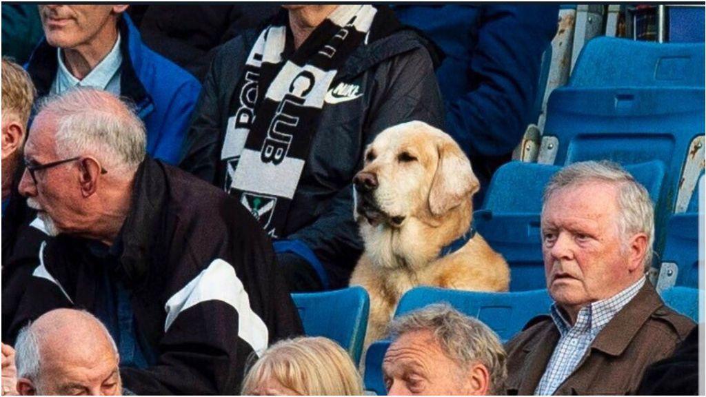 'Yardley', el perro aficionado de un equipo de Segunda División de Escocia