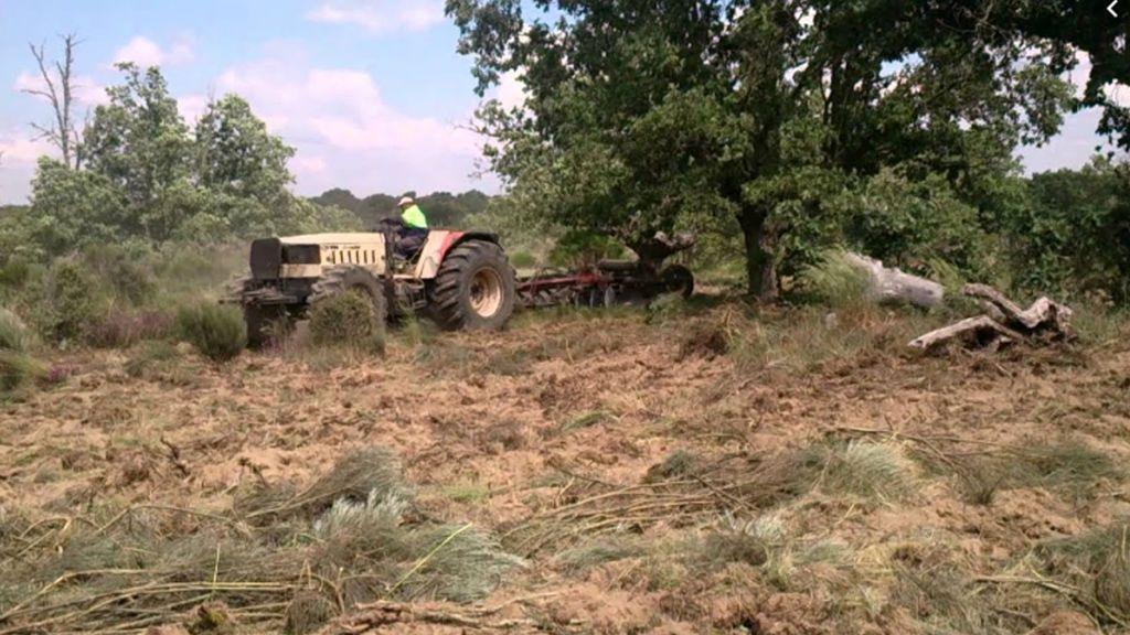 Un enjambre de avispas velutinas matan a un hombre de 66 años mientras desbrozaba en una finca de Galicia