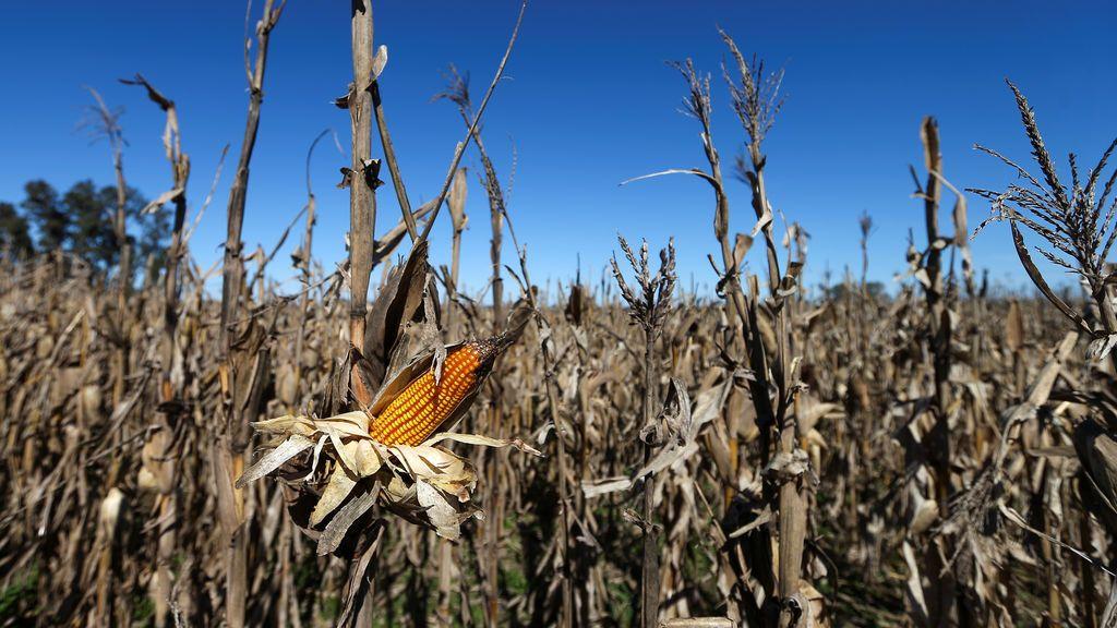 Europa se seca: la sequía será nuestra mayor amenaza para el futuro