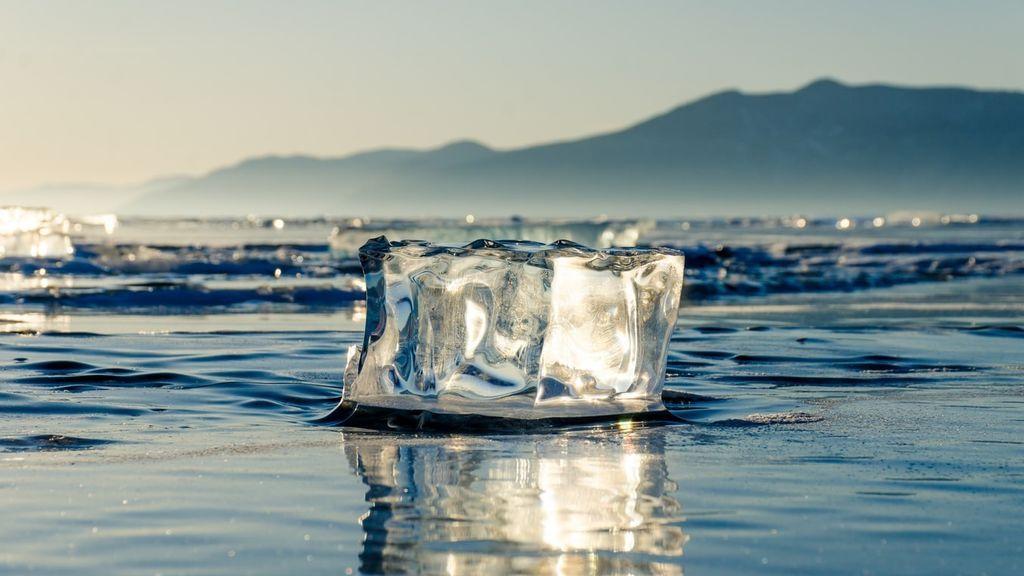 Florece el Ártico: el calor transforma el permafrost en un prado plagado de flores