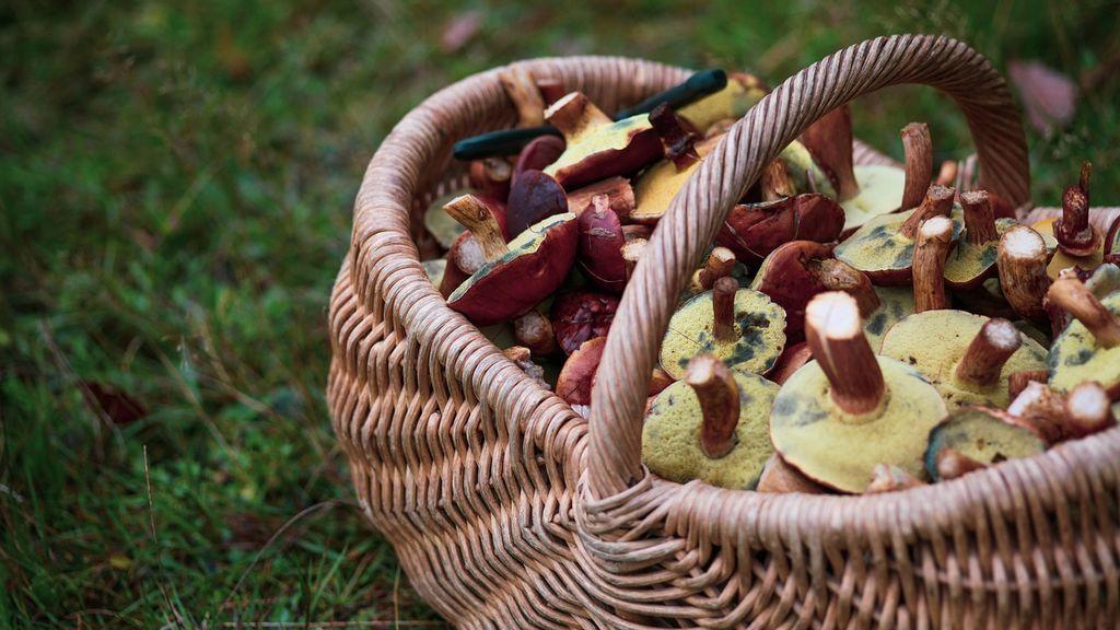 mushrooms-4521746_1280