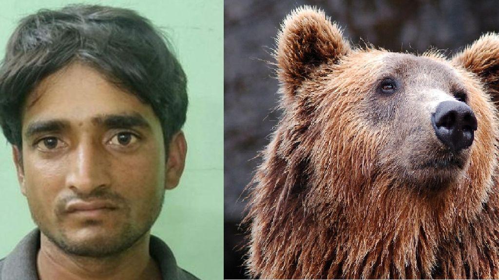 Detienen a un cazador furtivo que se comía los penes de los osos que mataba tras 6 años de búsqueda