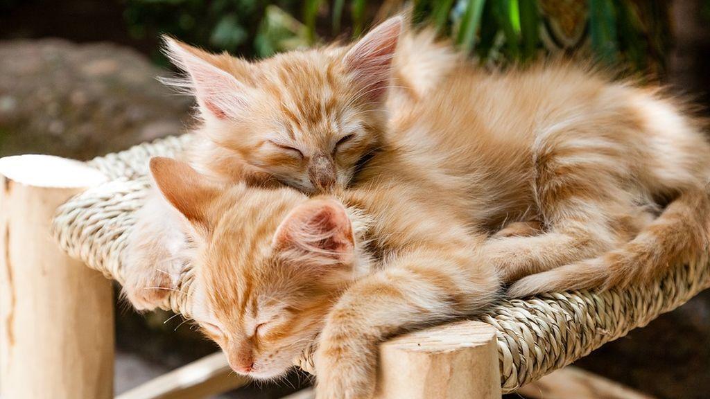 Un par de gatos salvan a sus dueños de morir aplastados en su casa