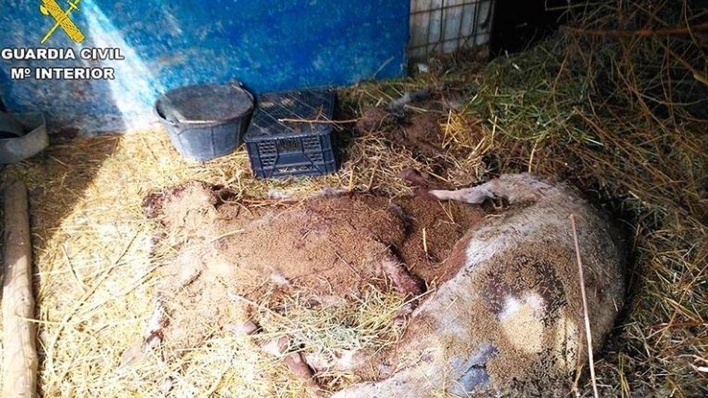 Detenido por robar 21 animales y provocar la muerte de otros 38 en una granja de Agost (Alicante)