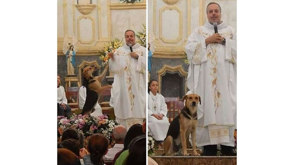 Brazilian-priest-welcomes-stray-dogs-inside-church-to-be-adopted-5daffa16d07f5__700