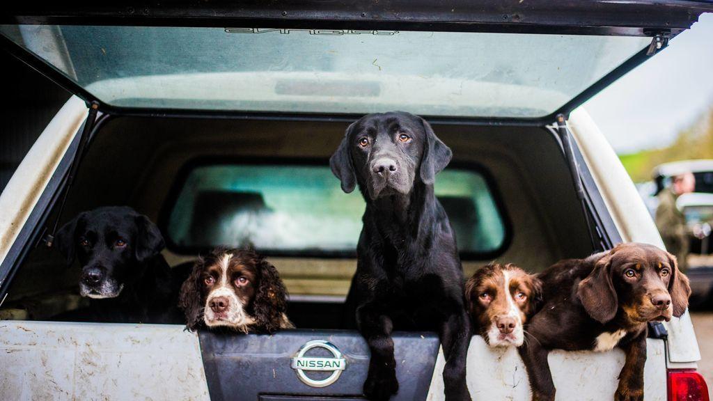 Un cura lleva a misa varios perros abandonados para ver si encuentran un hogar entre sus fieles