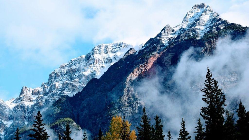 Niebla de vapor: el curioso efecto que envuelve en humo el tronco de  un árbol nevado