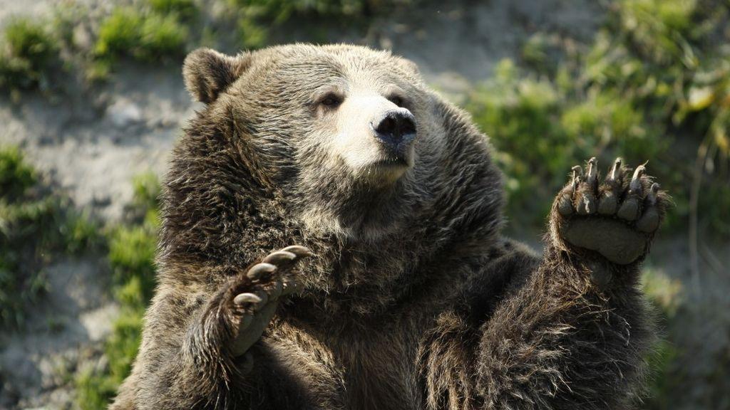 Terrible ataque de un oso a su domador en plena función en un circo