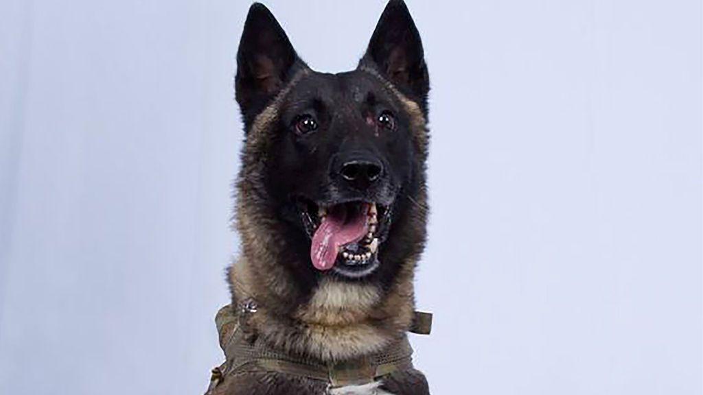 Un perro, clave en la captura del líder del Estado Islámico