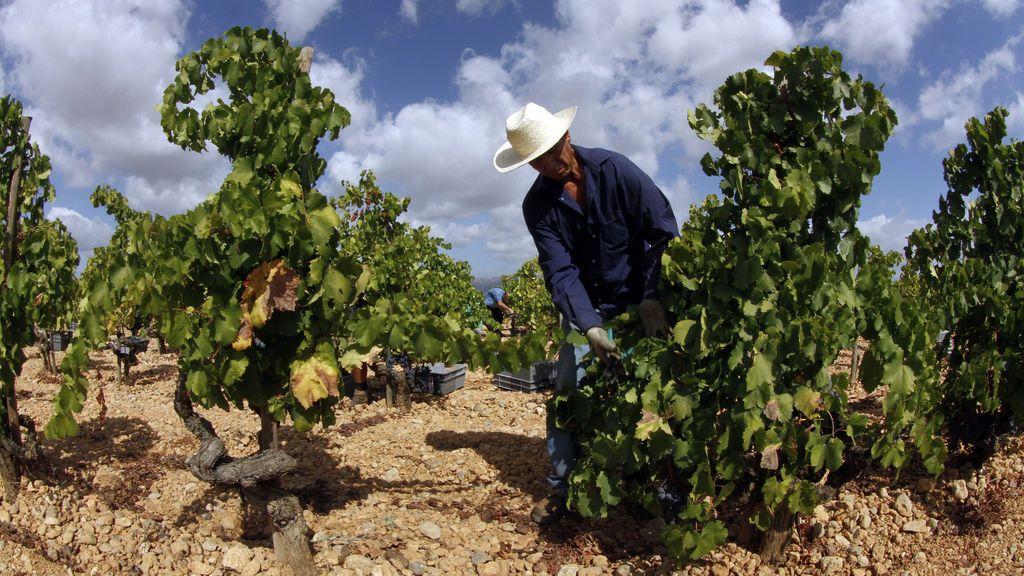 La producción de vino, amenazada por el cambio climático