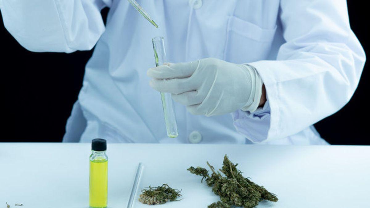 Cannabis para la depresión o ansiedad: No hay suficiente evidencia su efectividad en estos trastornos, según un estudio