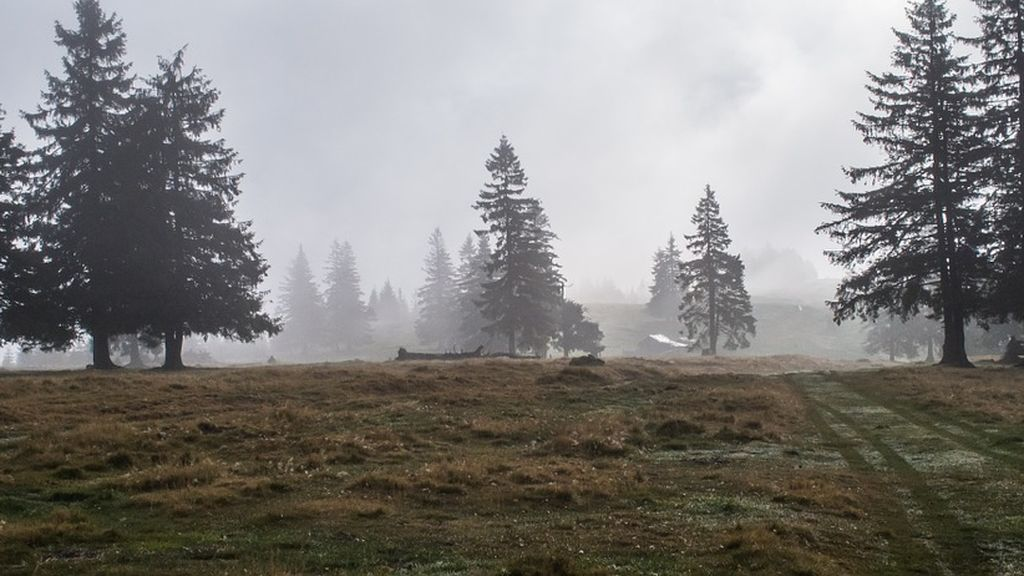 Bosque Hoia-Baciu