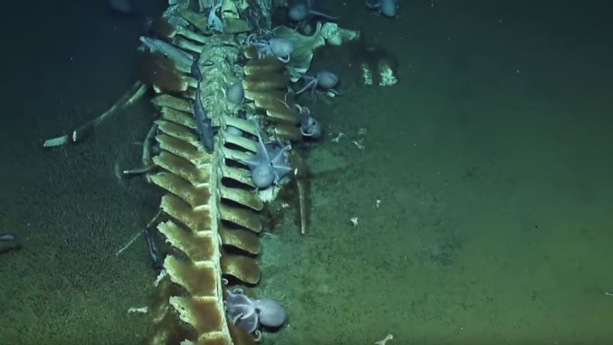 El submarino de investigación Nautilus muestra La noche de 'Halloween' de las profundidades