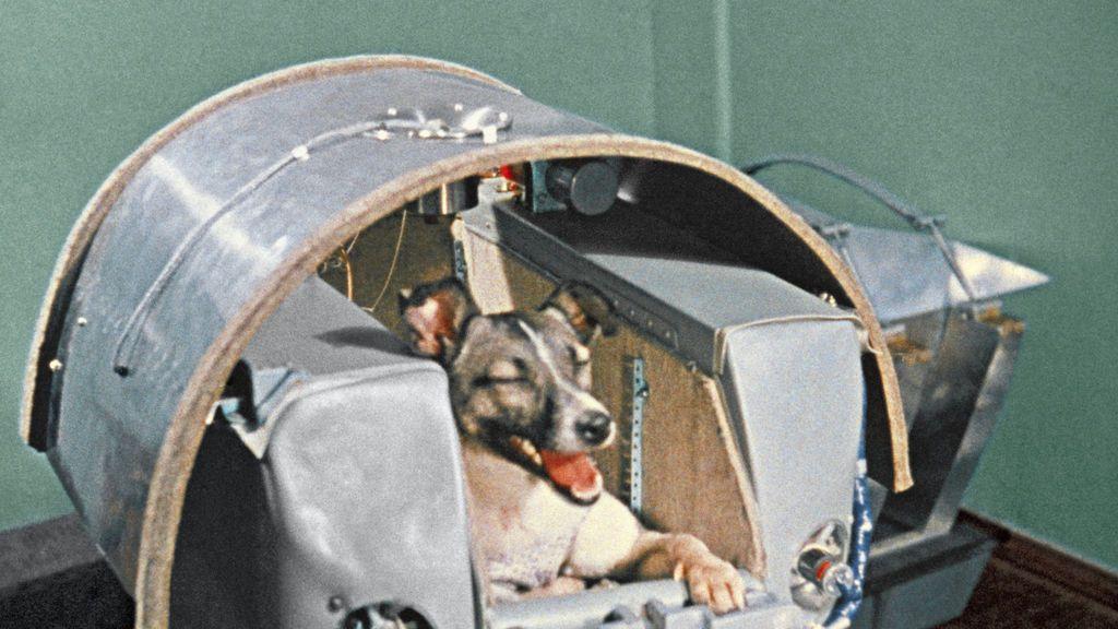 La triste historia de Laika, la perra a la que mandaron al espacio a morir sola