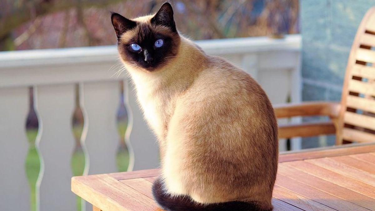 Una mujer de 65 años a punto de morir tras recibir un arañazo de su gato