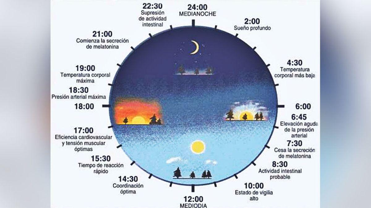 El reloj interno de nuestro cuerpo: momentos y horas clave para alimentarnos correctamente