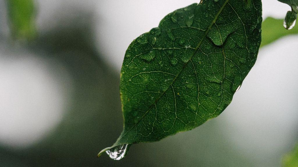 Las plantas sienten pánico cuando llueve: una reacción en cadena destapa su mayor miedo