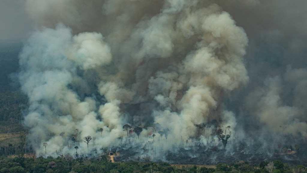 Miles de científicos declaran emergencia climática y piden acción inmediata