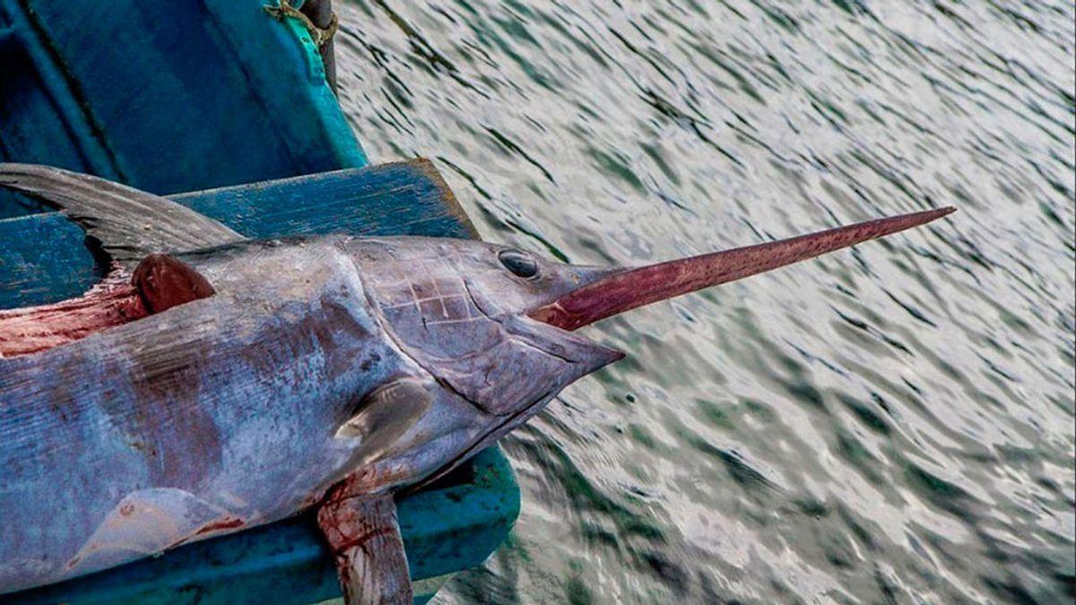 La lista de los pescados con más mercurio