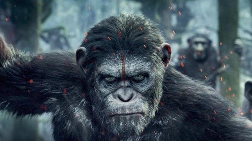 Descubre quién es quién de la mano de 'El planeta de los simios'