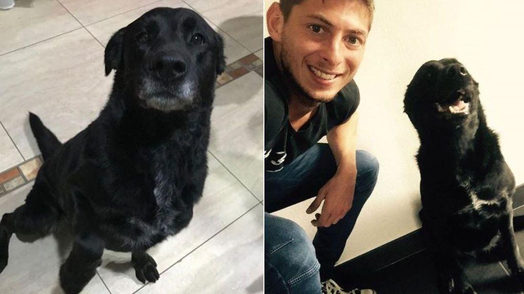 La nueva y feliz vida de Nala, la perra de Emiliano Sala: no se separa del sobrino del jugador