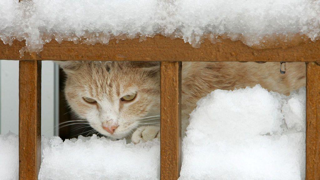 El episodio invernal sólo acaba de empezar: el domingo entra una nueva masa polar