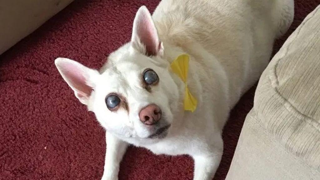 Un perro se queda ciego por estrés ante los fuegos artificiales: su dueña ha iniciado una campaña para prohibirlos