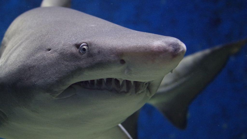 Aparece la mano de un turista desaparecido dentro de un tiburón muerto