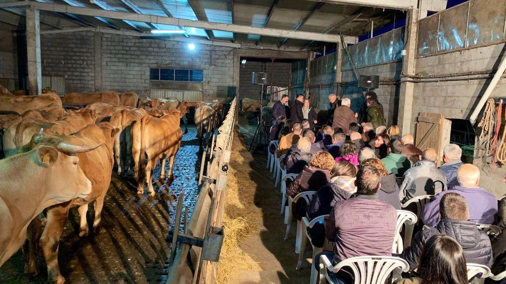 Mitín del PP en una cuadra de vacas de Lugo