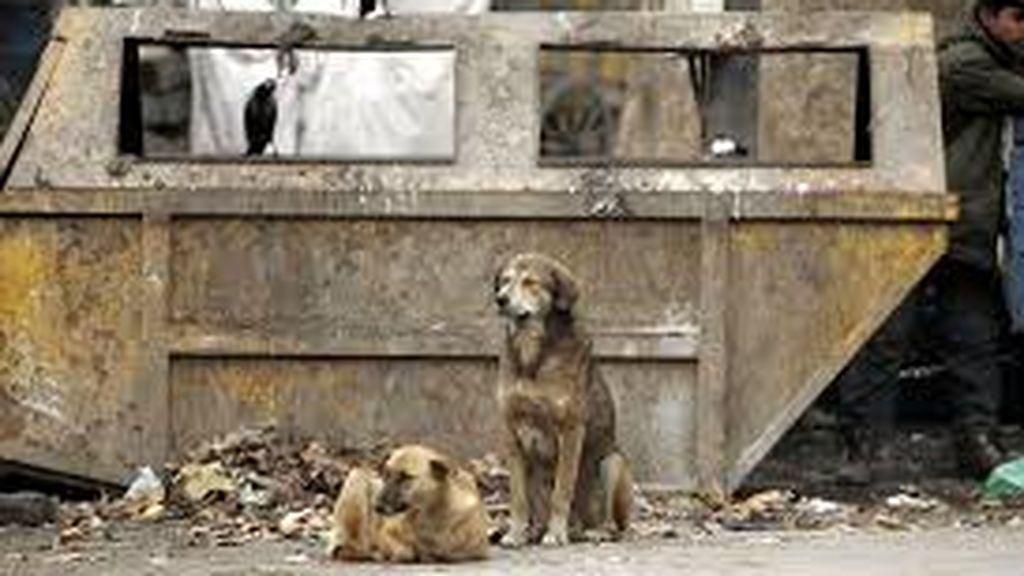 Un bebé es devorado por perros callejeros tras ser abandonado por su madre en un descampado