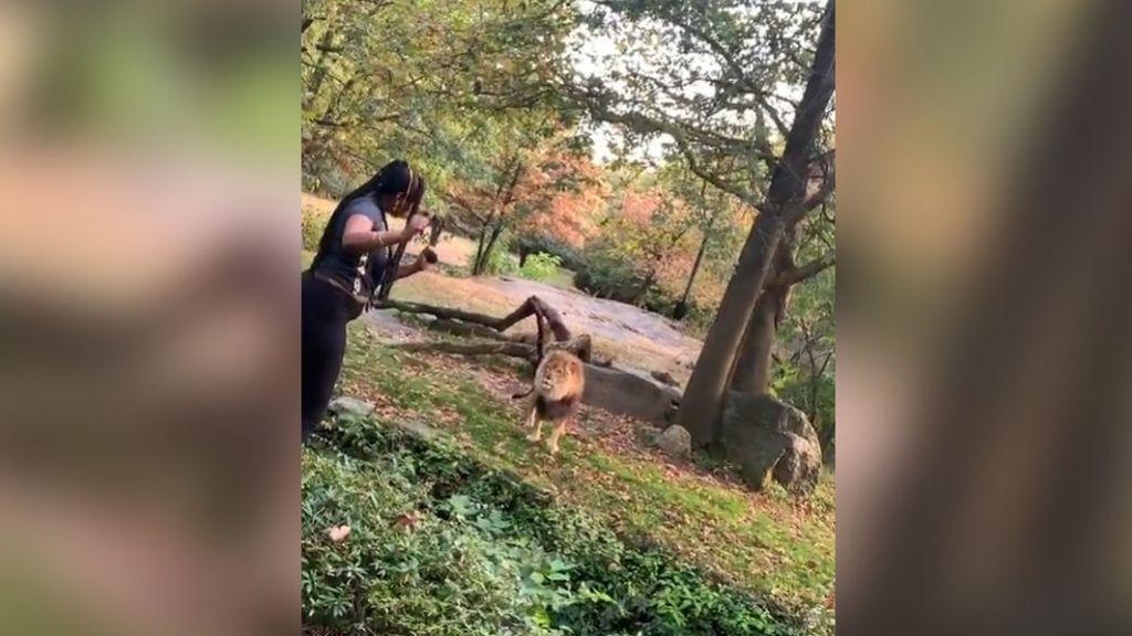 Detenida la mujer que se coló en el zoo del Bronx para bailar en frente de un león