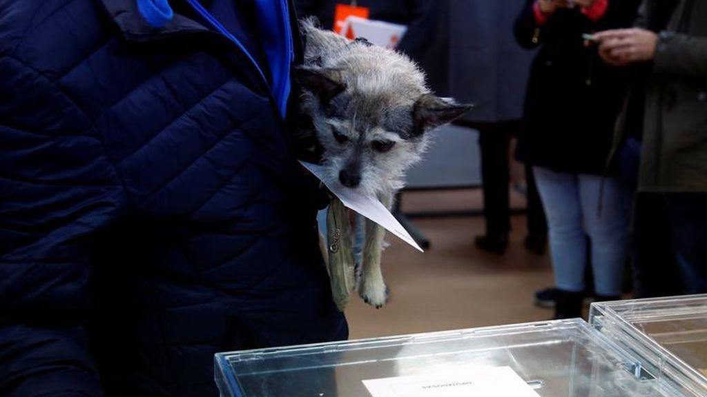 Un perro sostiene el sobre electoral de su dueño